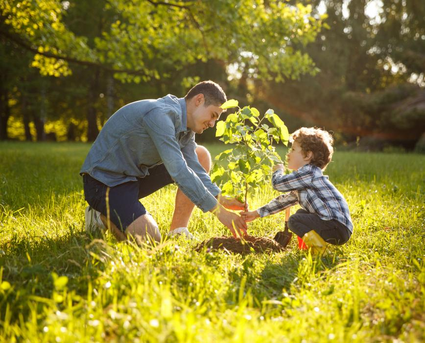 Father and son plant EVERTREE